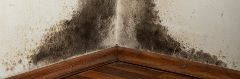 Mould insurance